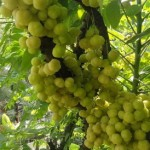 Top 4 Health Benefits of Amla with Supporting Research