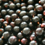 How to Use Black Currant Oil for Hair Loss and Better Health