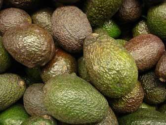 avocado monounsaturated fat