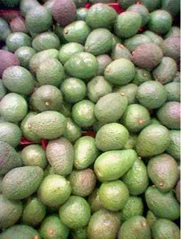 Avocado-Pile1-283x375