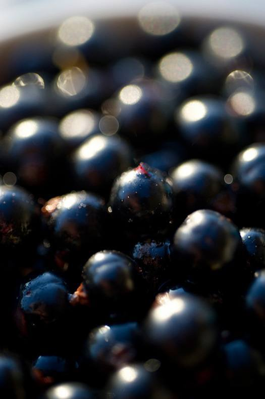 How To Use Black Currant Oil For Hair Loss Amp Better Health