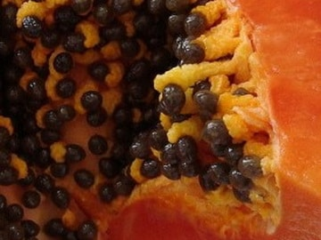 Fertility papaya seeds