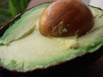 Avocado for smoothies