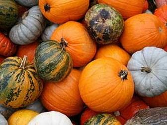 Mixed Pumpkin Breeds