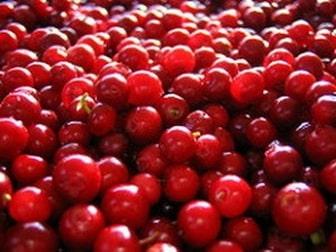 Nutrients in berries