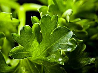 Parsley and its positive effects