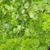Health Benefits of Parsley for Cancer, Arthritis and Heart Disease