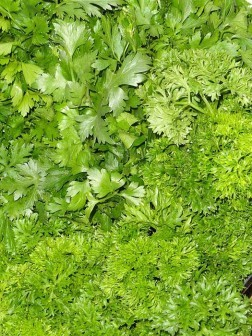 Parsley-health-benefits