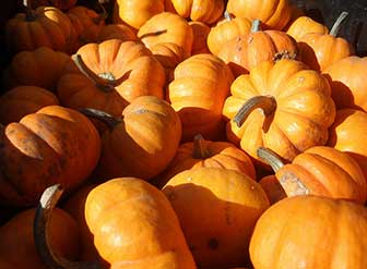 Healthy skin with pumpkin