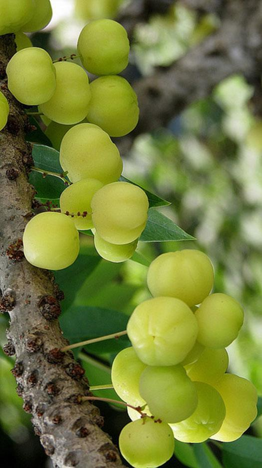 What Is Amla Powder Amp Why Is It Such A Powerful Superfood