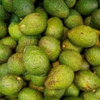 Choosing the Best Avocado Oil