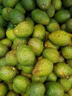 Californian avocado oil